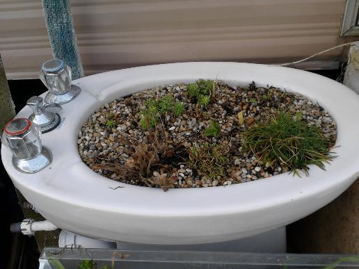 Bidet usato come vaso per piante